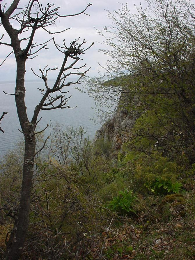 100_Südlich Ohrid