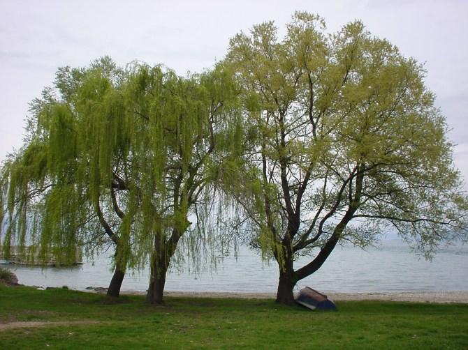 125_Bäume