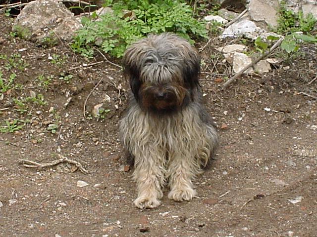 149_Unser Hund