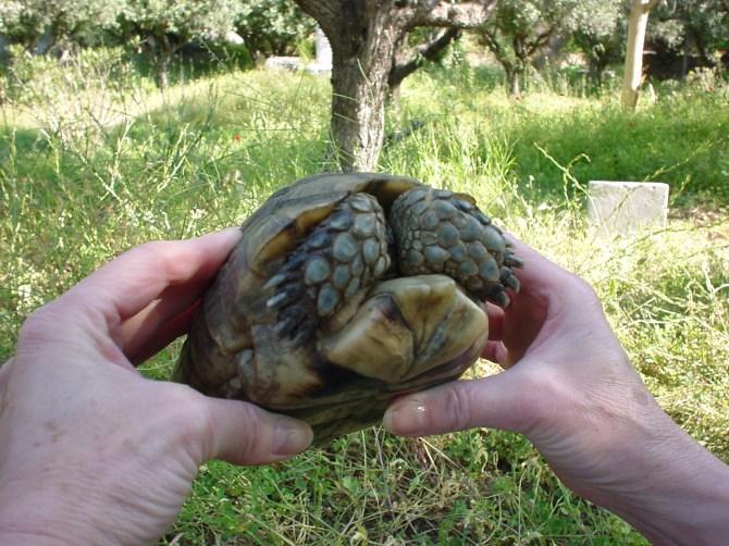 197_Schildkröte