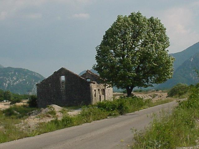 099_Verfallenes Haus mit Baum YU